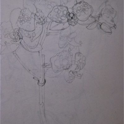 Pencil on Paper 20cm x 30cm approx
