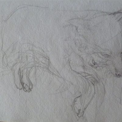 Scallywag Pencil on paper. 10cm x 15cm approx