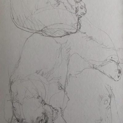 Medi drawings